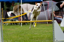 Best of Agility 2011